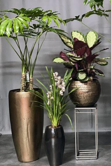 Саксийни растения / Pot plants