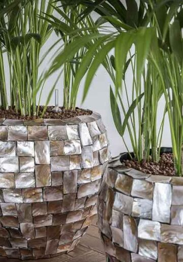 Растения в хидрокултура / Hydroculture